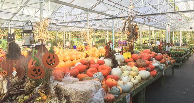 One aisle at the new Pike Nurseries in Matthews is filled with October fare. Photo by Scott Baughman